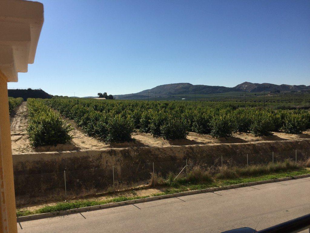 Mooi uitzicht over de omgeving van Algorfa